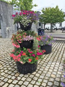 Pollinator-friendly containers in Maynooth